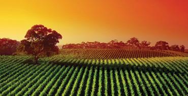 field-at-sunset.jpg
