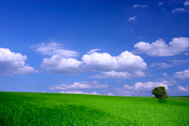 green-field.jpg